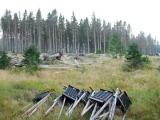 Kvůli kůrovci může trvat v lesích návrat k normálu až pět let