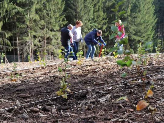 Lesům ČR se na práci v lesích hlásí stovky lidí