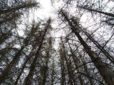 MŽP zveřejnilo výzvu k podávání žádostí o finanční příspěvek na zmírnění dopadů kůrovcové gradace v nestátních lesích na území NP a jejich ochranných pásem za rok 2020