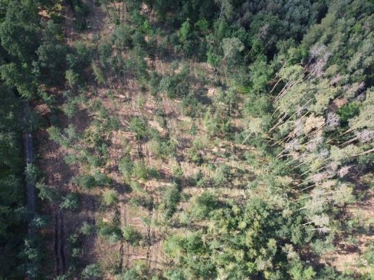 Majitelé lesů si řekli o 11,5 mld. Kč na kompenzace za kůrovce, stát jim vyplatí třetinu