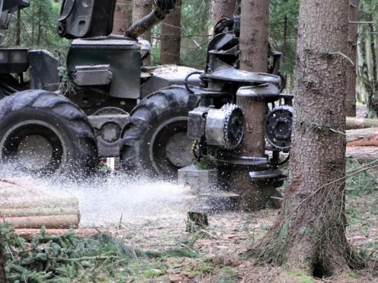 Lesy ČR přijaly od firem 403 nabídek v pětimiliardovém tendru 2022+