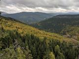 Memorandum vyzývá k adekvátní podpoře lesního hospodářství z prostředků Společné zemědělské politiky