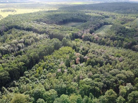 Ministerstvo zemědělství podpoří krajinu a zemědělce 1,2 miliardy korun, nejvíce poskytne na lesní cesty a výsadbu stromků na holinách